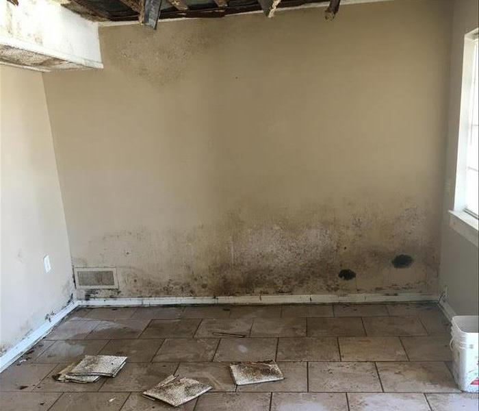 Mold Remediation Roof Damage from Hurricane Irma Results in Widespread Mold